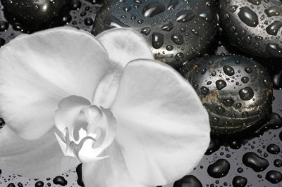 Photo of a white flower lying on wet, black flat stones; for information on holistic dentistry from Dr. Lesage of Beverly Hills.